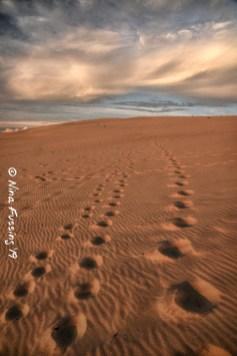 Dune footsteps