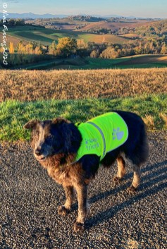 We carry a yellow vest for Polly too