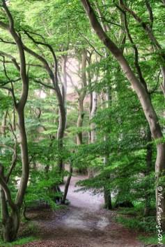 Fairytale trees