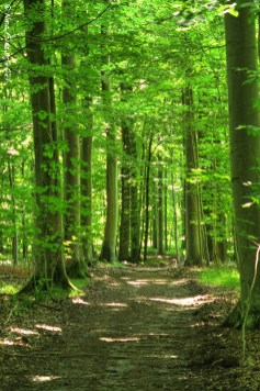 Soothing woods