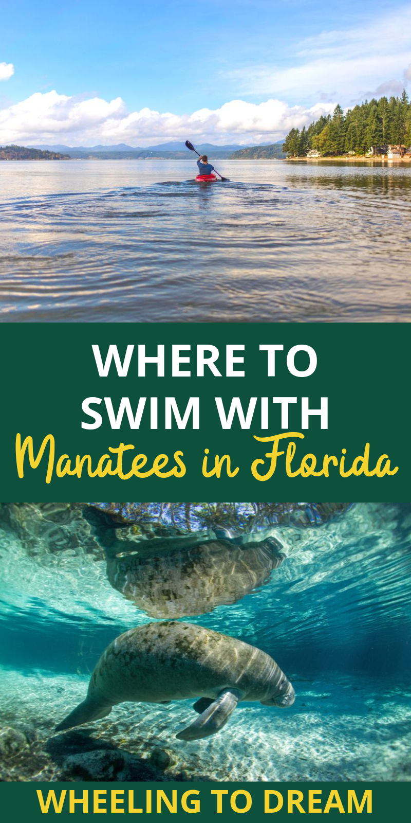 If you are looking for a fun family vacation idea in Florida this is for you! Florida family vacations offer you the ability to see so many things. You can swim Florida Springs as well as kayak rivers. If you are an active family this trip will be perfect for you. The things to do in Crystal River Florida are vast. Swimming with manatees in Crystal River won\'t be disappointing. #rvlifestyle #familytraveltips #floridavacations #manatees #swimwithmanatees #crystalriver #crystalriverfl