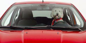 Ford Ka EU Market poodle-driver