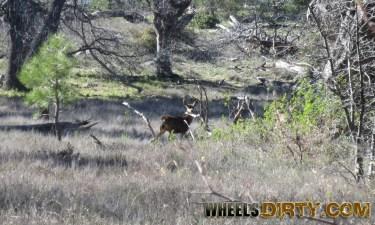 This deer is on high alert.