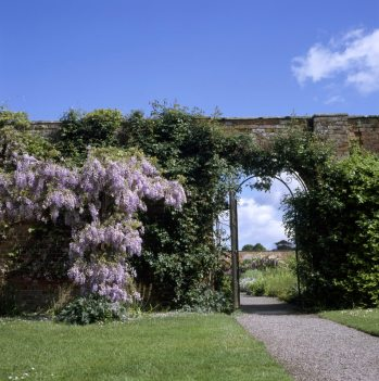 Berrington Hall. View of the gate to the walled garden. Wisteria in bloom covers the brick wall.