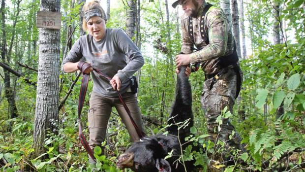 Guided Bear Hunting Minnesota