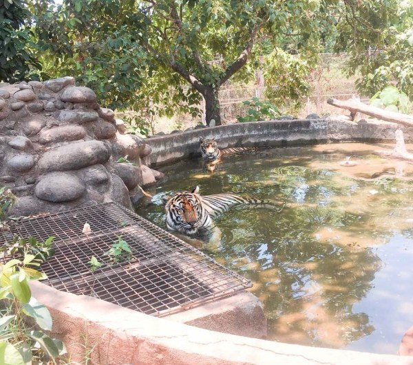 A man-made watering hole at the center of the Tiger Sanctuary