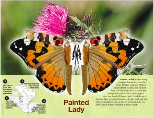 Painted Lady Butterfly Page