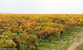 burgundy-wpress-07914