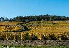 burgundy-wpress-08049