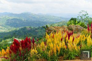 Cebu City Sirao Pictorial Garden and Mini Camping Site