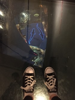 Walking over the glass floor with a view of the aquarium!