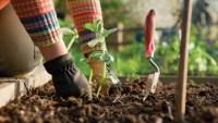 14 Clever Gardening Tips & Tricks