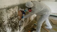Five Rules of Mold Cleanup
