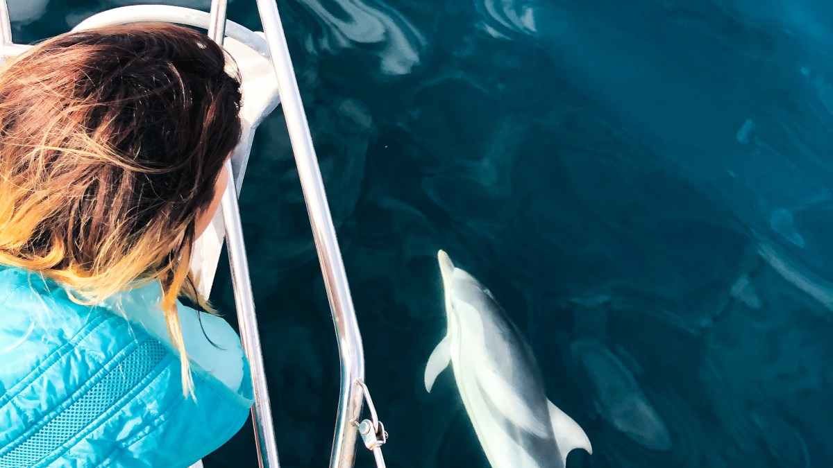 girl on sailboat with dolphin