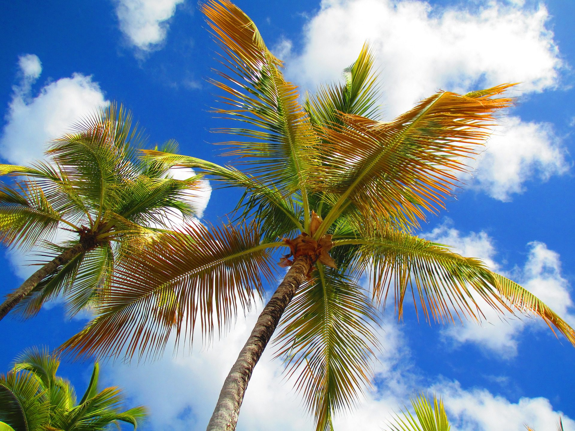 Tropical Island Vacations: The Best Tropical Island Vacation Destinations