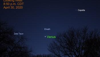Venus approaches Elnath, April 30, 2020