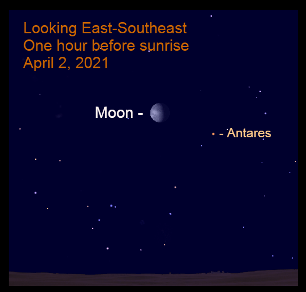 April 2, 2021: One hour before sunrise, the moon is 7.8° to the upper left of Antares.