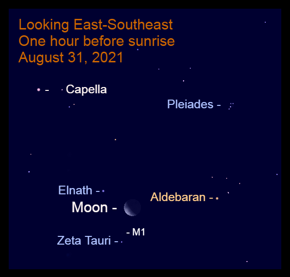 2021, August 31: The moon is caught between the Bull's horns – Elnath and Zeta Tauri.