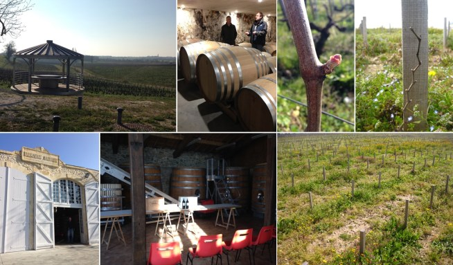 View of the vines and the cellar entrance from Domaine Andron. Inside, our debrief starts among the big oak fermenting tanks, and wraps up by the big oak aging barrels. Outside, bud burst, a brand new Merlot plant, and a field of dreams.