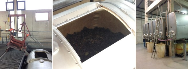 A little elbow grease and the help of this contraption ensure that the grapes make it into the pressoir without too much delay. The juice, also known as must, drops down into these tanks set up in the room below.