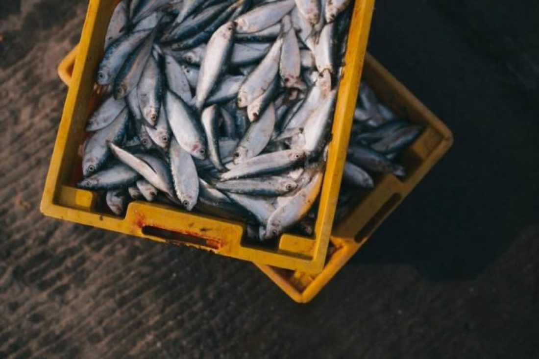 The rise of aquaculture