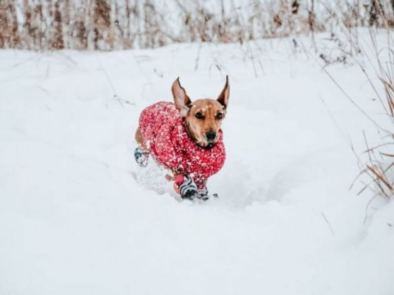Best clothes for dogs