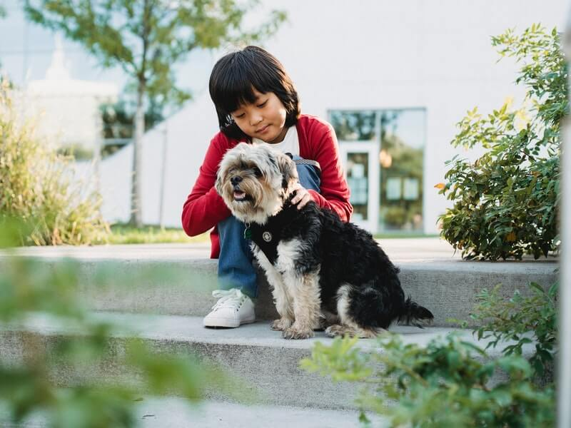 Career paths for kids who love animals