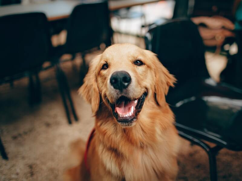 Clean dog: Your pet is happy