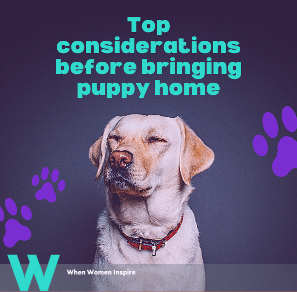 Buying a puppy considerations