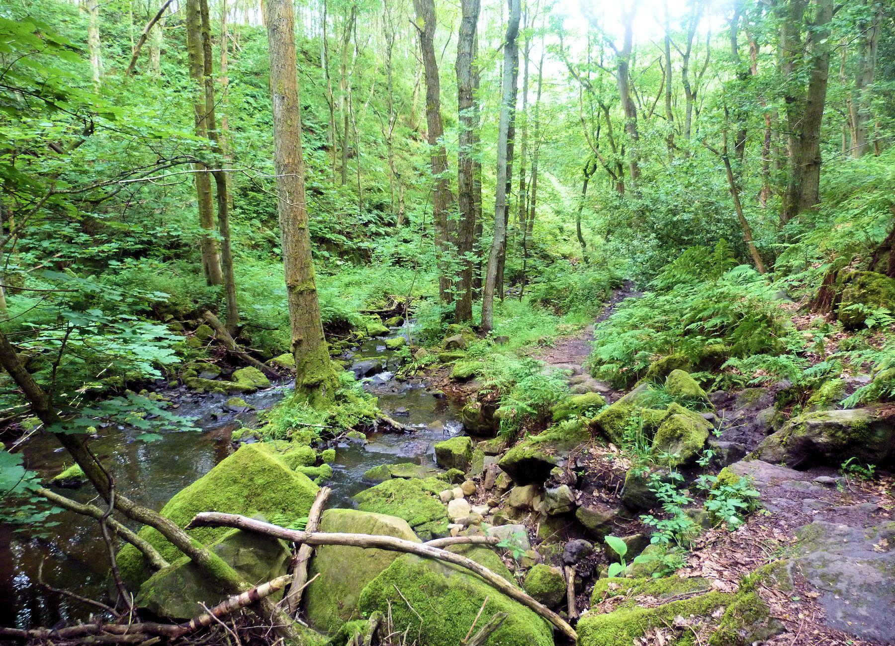 Woods near Smelthouses
