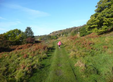 Whitcliffe Wood,