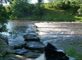 Stepping stones near Aysgarth