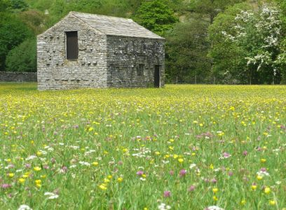 Hay Meadows June