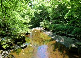 Whitfield Gill Falls