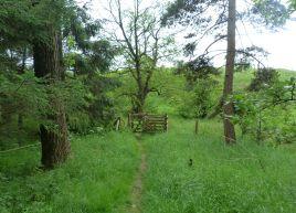 Ribble Near Gisburn