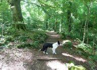 Serpentine Woods