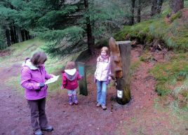 Whinlatter Forest Trail