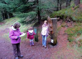 Whinlatter Forest Trail