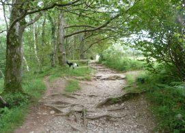 Castlerigg Woods