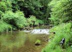 Eden near Appleby