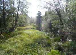 Woodland Tarn Hows