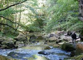 Beck near Mallyan Spout