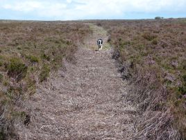 Sneaton High Moor walk