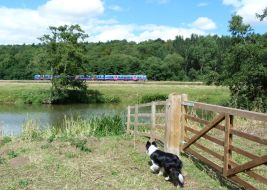 River Derwent and train