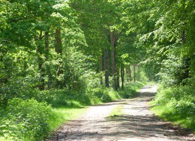 Settrington Woods