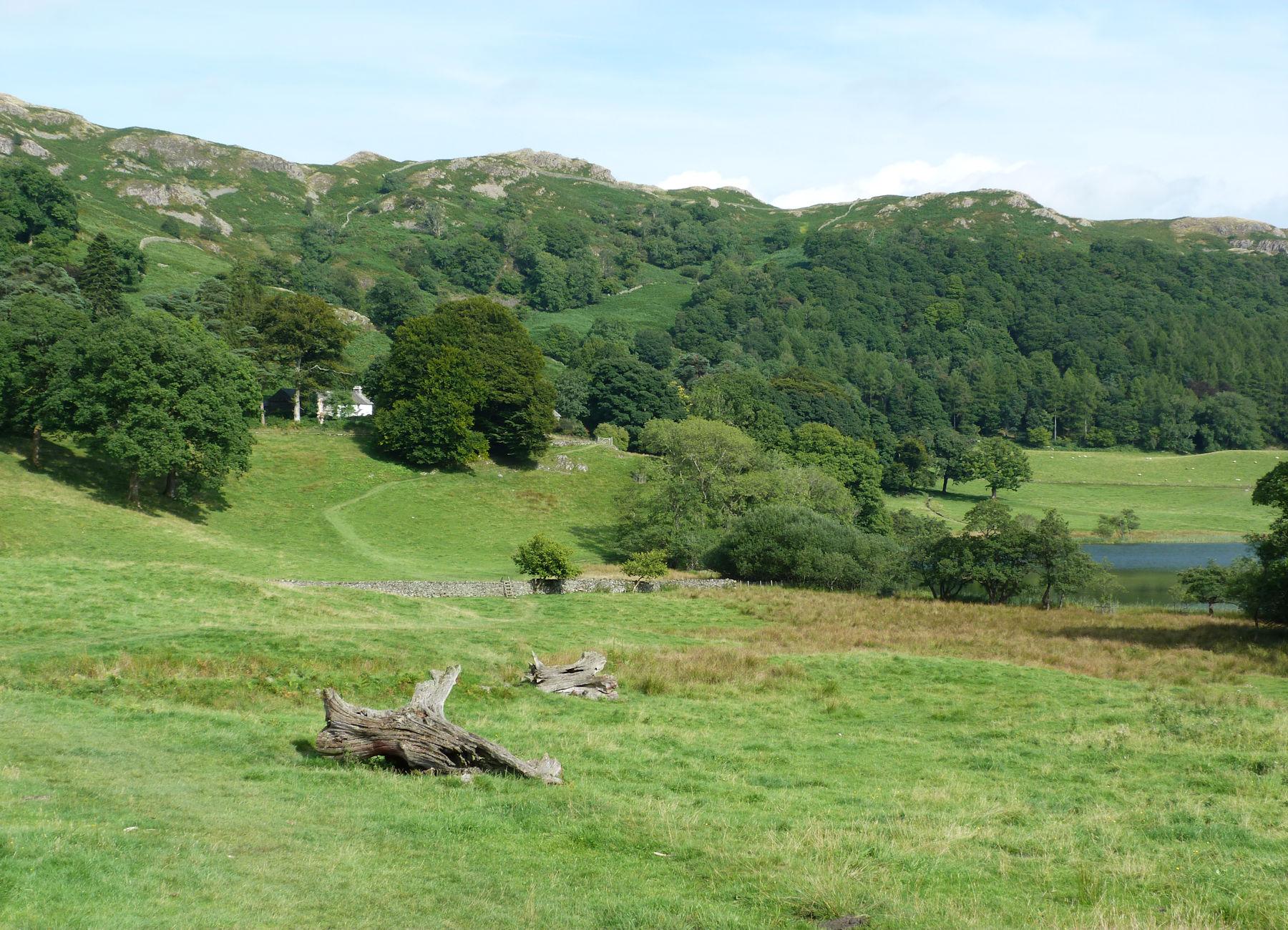 Near Loughrigg Tarn