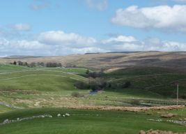 Near Ribblehead