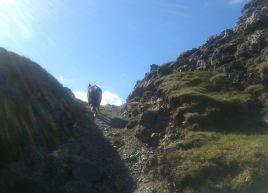 Hall's Fell climb