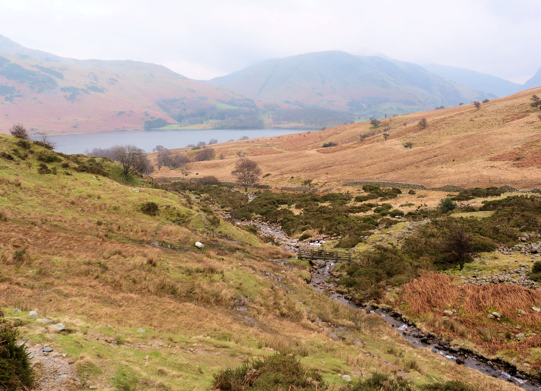 Near Scales Force