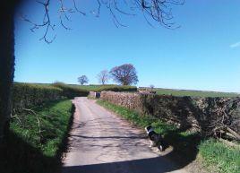 Lanes near Askham